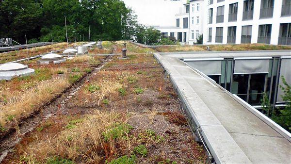 Pacific Haus, Hamburg (Holzdamm) - Planung und Baubegleitung der Dachsanierung und neue Begrünung